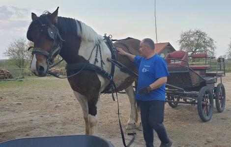 Grander koń zimnokrwisty