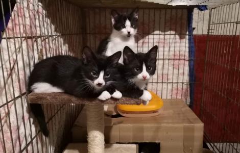 4 kotki