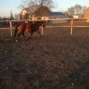 Pensjonat dla koni, wolne boksy